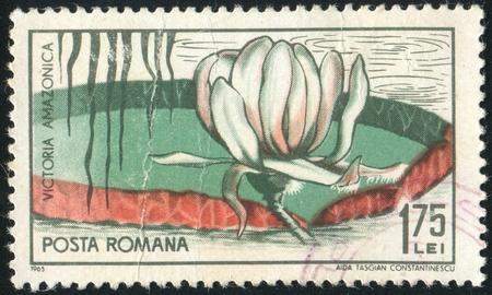 ROMANIA - CIRCA 1965: stamp printed by Romania, show Victoria water lily, circa 1965. photo