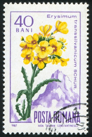 ROMANIA - CIRCA 1967: stamp printed by Romania, show Hedge mustard, circa 1967. Stock Photo - 10071825