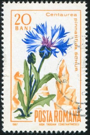 ROMANIA - CIRCA 1967: stamp printed by Romania, show Centaury, circa 1967. Stock Photo - 10071782