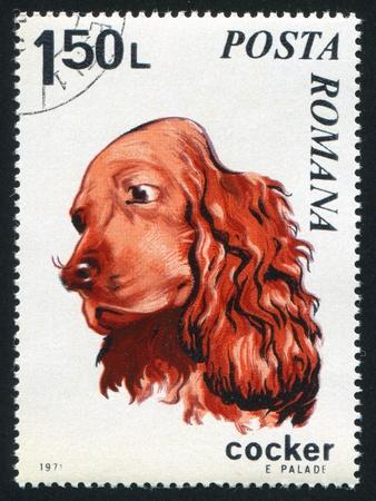 ROMANIA - CIRCA 1971: stamp printed by Romania, show Cocker spaniel, circa 1971. photo