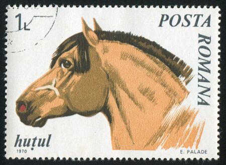 show horse: ROMANIA - CIRCA 1970: stamp printed by Romania, show horse Northern Moravian, circa 1970.