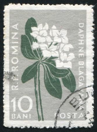 dafne: ROMANIA - CIRCA 1957: timbro stampato dalla Romania, mostra Daphne, intorno al 1957.