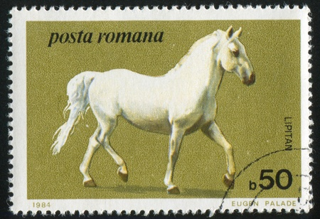 show horse: ROMANIA - CIRCA 1986: stamp printed by Romania, show horse, circa 1986. Stock Photo