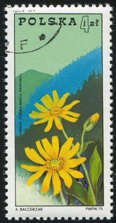 caulis: POLAND - CIRCA 1975: stamp printed by Poland, shows Arnica and Beskids Mountains, circa 1975