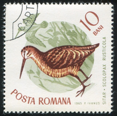 ROMANIA - CIRCA 1965: stamp printed by Romania, show Eurasian woodcock, circa 1965. photo