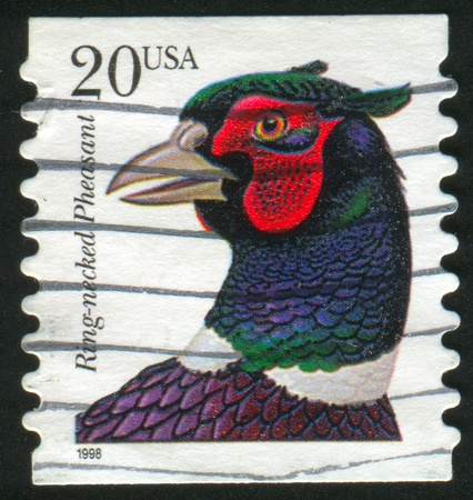 necked: UNITED STATES - CIRCA 1998: stamp printed by United states, shows Ring necked Pheasant, circa 1998