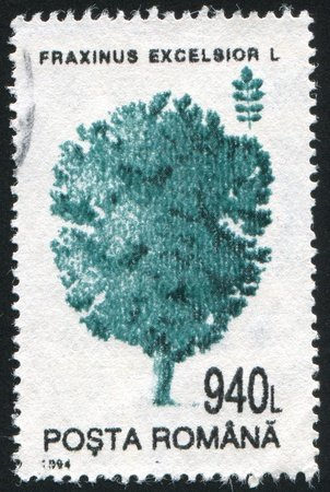 excelsior: ROMANIA - CIRCA 1994: stamp printed by Romania, show Fraxinus excelsior, circa 1994.