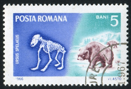 eyes cave: ROMANIA - CIRCA 1966: stamp printed by Romania, shows Cave Bear, circa 1966