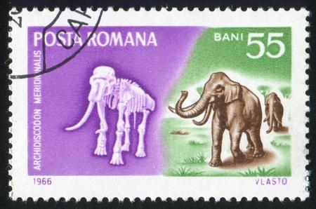ROMANIA - CIRCA 1966: stamp printed by Romania, shows Cave elephant, circa 1966 Stock Photo - 10432757