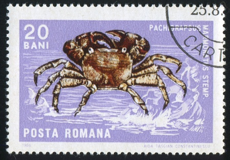 ROMANIA - CIRCA 1966: stamp printed by Romania, shows Molluscs and Crustaceans, Stone Crab, circa 1966 photo