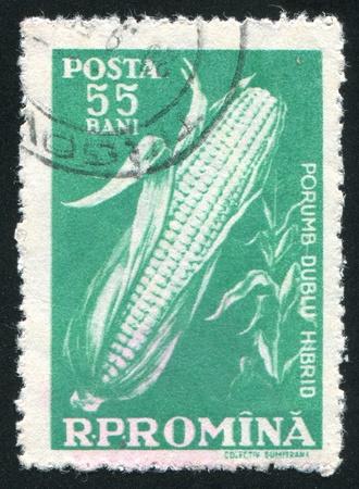 caulis: ROMANIA - CIRCA 1959: stamp printed by Romania, shows Corn, circa 1959 Stock Photo