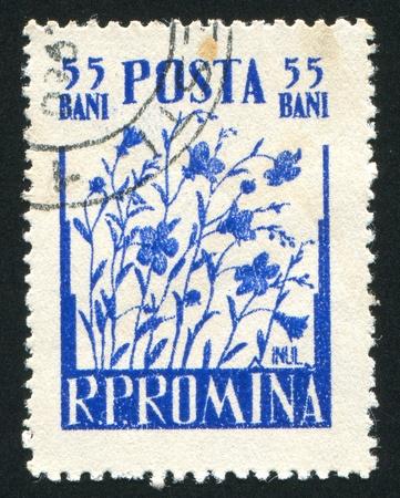 caulis: ROMANIA - CIRCA 1955: stamp printed by Romania, shows Flax, circa 1955 Stock Photo