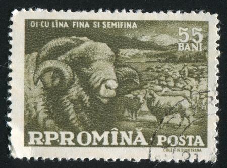 ROMANIA - CIRCA 1959: stamp printed by Romania, shows Sheep, circa 1959 photo