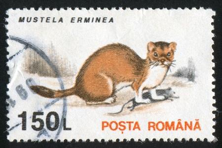 stoat: ROMANIA - CIRCA 1993: stamp printed by Romania, shows Mustela erminea, circa 1993