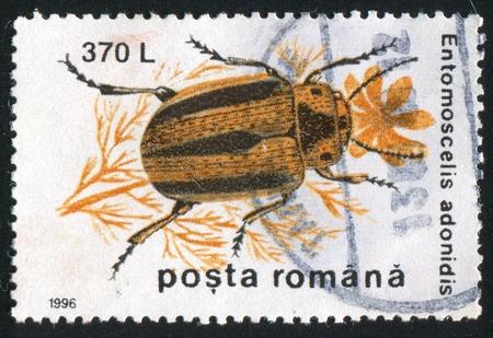 chitin: ROMANIA - CIRCA 1996: stamp printed by Romania, shows Entomoscelis adonidis, circa 1996