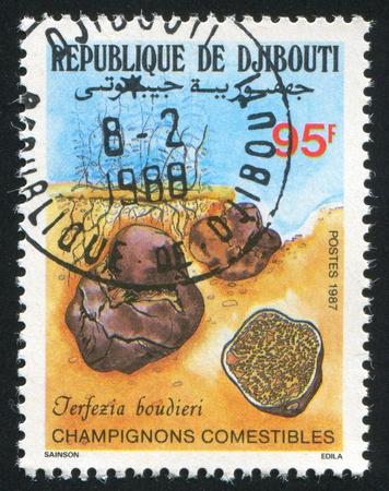 benin: BENIN - CIRCA 1987: stamp printed by Benin, shows mushroom, circa 1987. Stock Photo