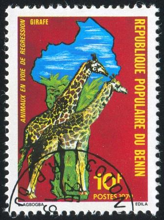 BENIN - CIRCA 1979: stamp printed by Benin, shows giraffe, circa 1979. photo