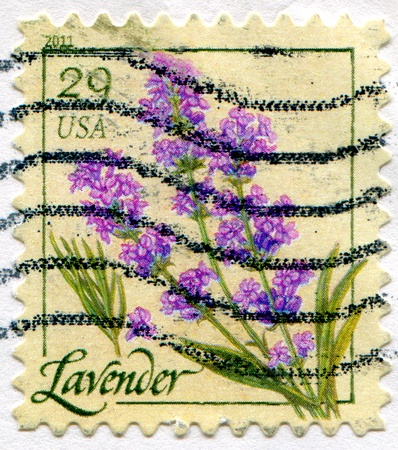 UNITED STATES - CIRCA 2011: stamp printed by United States of America, shows lavender, circa 2011 photo