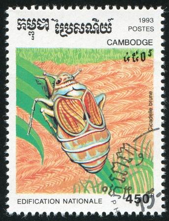 brune: CAMBODIA - CIRCA 1993: stamp printed by Cambodia, shows Cicadelle brune, circa 1993.