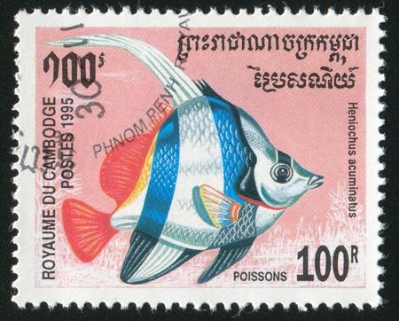 CAMBODIA - CIRCA 1995: stamp printed by Cambodia, shows fish, circa 1995. photo