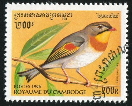 leiothrix: CAMBODIA - CIRCA 1996: stamp printed by Cambodia, shows bird, Leiothrix lutea, circa 1996.