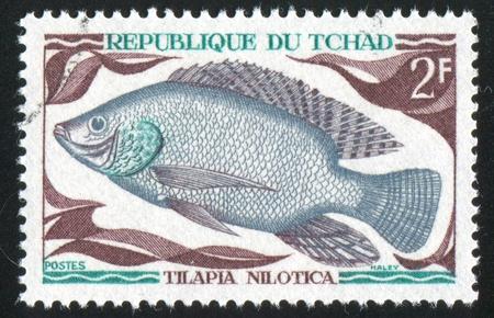 nilotica: CHAD - CIRCA 1969: stamp printed by Chad, shows Tilapia Nilotica, circa 1969. Stock Photo
