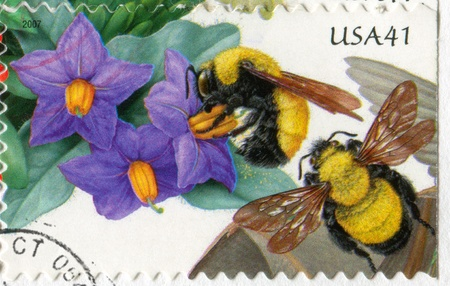 UNITED STATES - CIRCA 2007: stamp printed by United States of America, shows Purple Nightshade and Morrison Bumblebee, circa 2007 Stock Photo