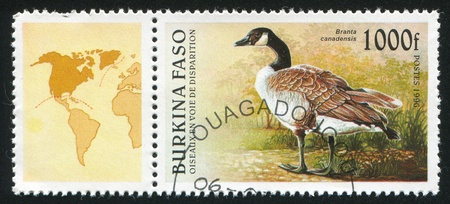 BURKINA FASO CIRCA 1996: stamp printed by Burkina Faso, shows Canada Goose, circa 1996 photo