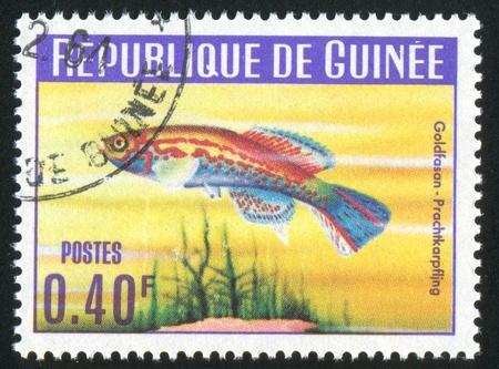 GUINEA - CIRCA 1964:   stamp printed by Guinea,  shows Jewelfish, circa 1964. photo