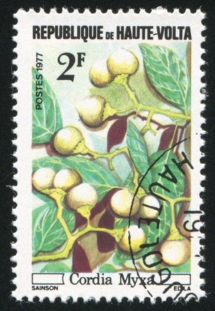BURKINA FASO CIRCA 1977: stamp printed by Burkina Faso, shows Wild fruits, Cordia myxa, circa 1977 Stock Photo - 11049907