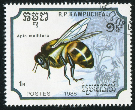 CAMBODIA CIRCA 1988: stamp printed by Cambodia, shows Bee, circa 1988 Stock Photo - 11049857