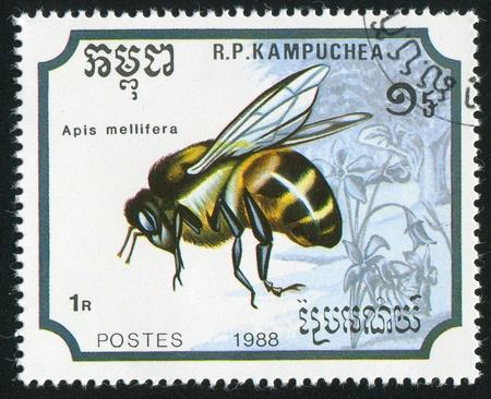 CAMBODIA CIRCA 1988: stamp printed by Cambodia, shows Bee, circa 1988 Stock Photo - 11049857