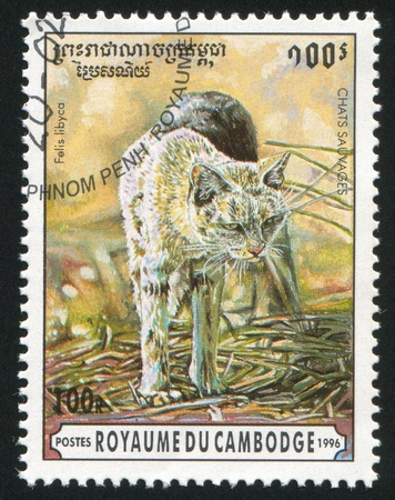 CAMBODIA CIRCA 1996: stamp printed by Cambodia, shows African wildcat, circa 1996 photo