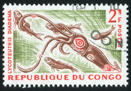 seizing: CONGO CIRCA 1964: stamp printed by Congo, shows Fire Squid, circa 1964 Stock Photo