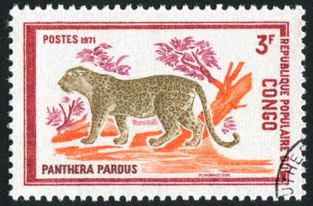 CONGO CIRCA 1971: stamp printed by Congo, shows Leopard, circa 1971 Stock Photo - 11050009