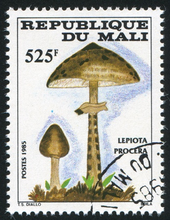 MALI - CIRCA 1985: stamp printed by Mali, shows mushroom, circa 1985 photo