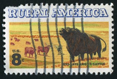 longhorn cattle: ESTADOS UNIDOS - CIRCA 1973: sello impreso por Estados Unidos, muestra angus y ganado de cuernos largos, alrededor del a�o 1973