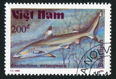 VIET NAM - CIRCA 1991: stamp printed by Viet Nam, shows Carcharhinus melanopterus, circa 1991 photo