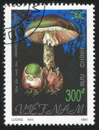 nam: VIET NAM - CIRCA 1991: stamp printed by Viet Nam, shows mushroom, circa 1991 Stock Photo