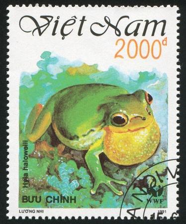 nam: VIET NAM - CIRCA 1991: stamp printed by Viet Nam, shows frog, circa 1991