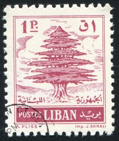 cedro: L�BANO - CIRCA 1950: sello impreso por Libanon, muestra cedro del L�bano, alrededor de 1950