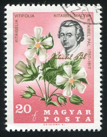 HUNGARY - CIRCA 1967: stamp printed by Hungary, shows Pal Kitaibel and Kitaibelia Vitifolia, circa 1967 Stock Photo - 11176108