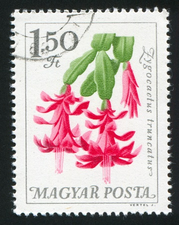 HUNGARY - CIRCA 1965: stamp printed by Hungary, shows Christmas cactus, circa 1965 photo