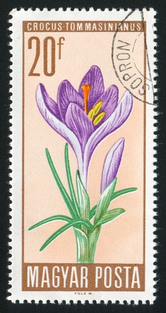 HUNGARY - CIRCA 1967: stamp printed by Hungary, shows Crocus, circa 1967 Stock Photo - 11176180