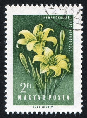 HUNGARY - CIRCA 1958: stamp printed by Hungary, shows Lilies, circa 1958 Stock Photo - 11176105