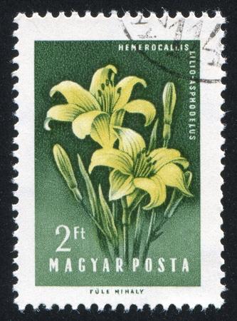 HUNGARY - CIRCA 1958: stamp printed by Hungary, shows Lilies, circa 1958 Stock Photo - 11176105