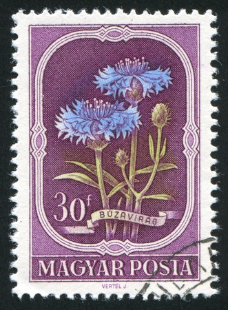 HUNGARY - CIRCA 1967: stamp printed by Hungary, shows Cornflower, circa 1967 Stock Photo - 11176134