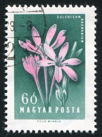 HUNGARY - CIRCA 1958: stamp printed by Hungary, shows Crocuses, circa 1958 Stock Photo - 11176084