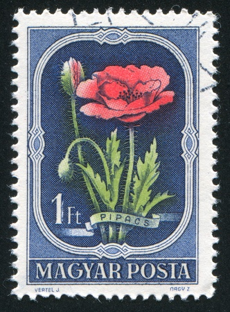 HUNGARY - CIRCA 1967: stamp printed by Hungary, shows poppy, circa 1967 Stock Photo - 11176165