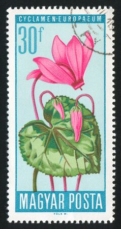 HUNGARY - CIRCA 1967: stamp printed by Hungary, shows Ligularia sibirica, circa 1967 Stock Photo - 11176169